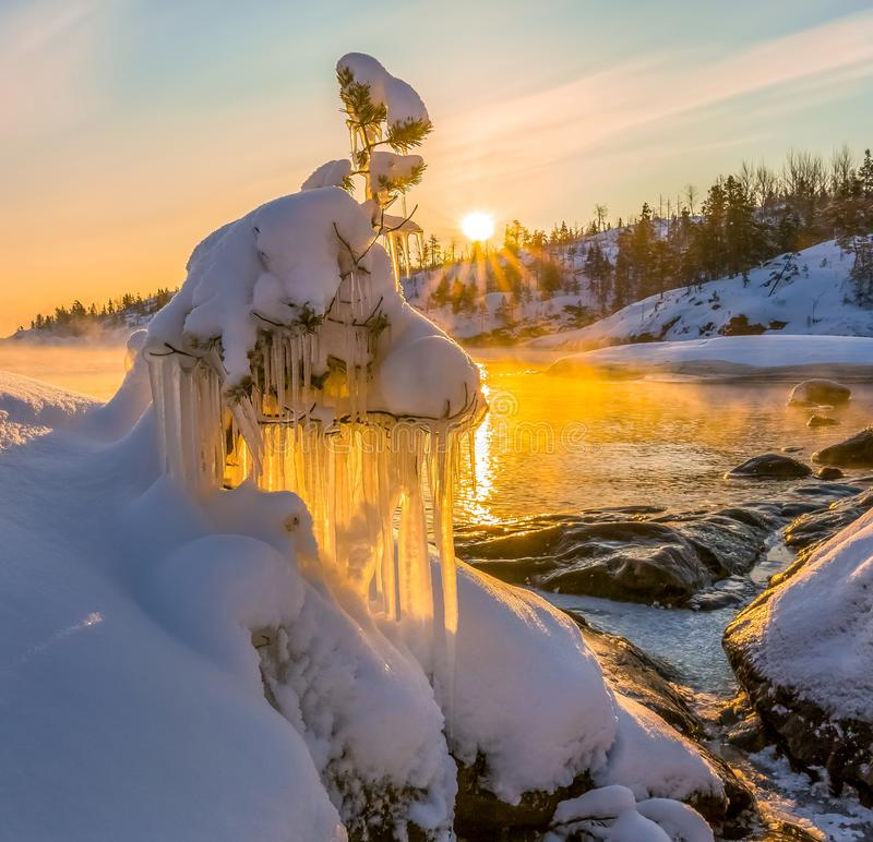 Pine in the ice. A small tree in the winter. royalty free stock photo