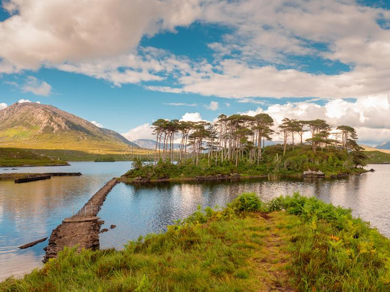 Pine island in Connemara national park, Sunny warm day, County Galway, Ireland. Cloudy dramatic sky. Pine island in Connemara national park, Sunny bright warm royalty free stock image