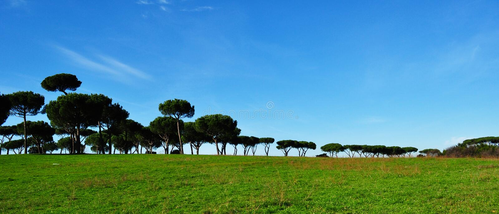 Download Pine landscape stock image. Image of panoramic, line - 17664919