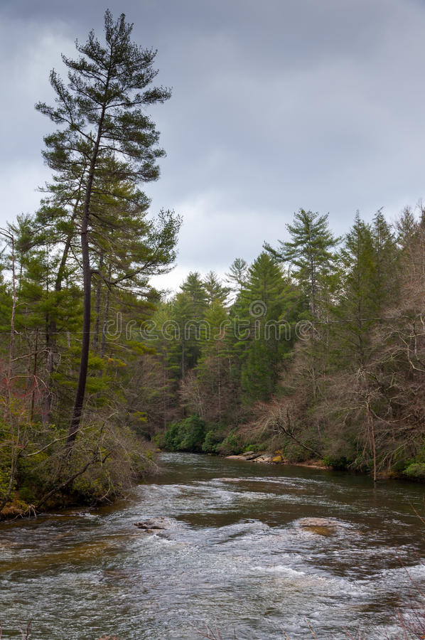 Pine leaning over River stock photo