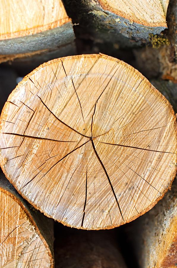 Pine log of round shape royalty free stock images