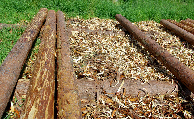 Pine logs. The background withe pine logs stock image