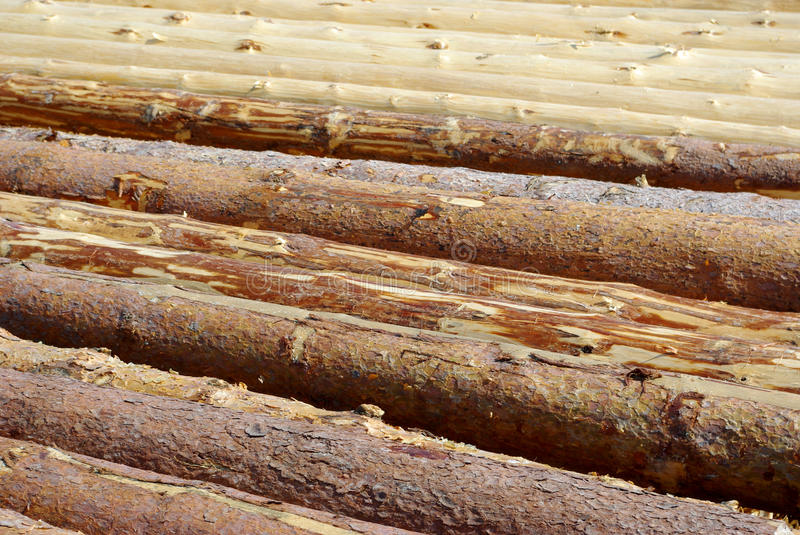 Pine logs. The background withe pine logs royalty free stock photos