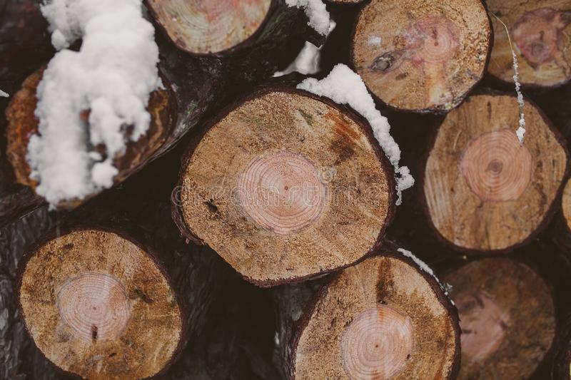 Pine logs background. Timber industry. Tree trunks texture and background for designers. Pine logs in winter forest. stock photos