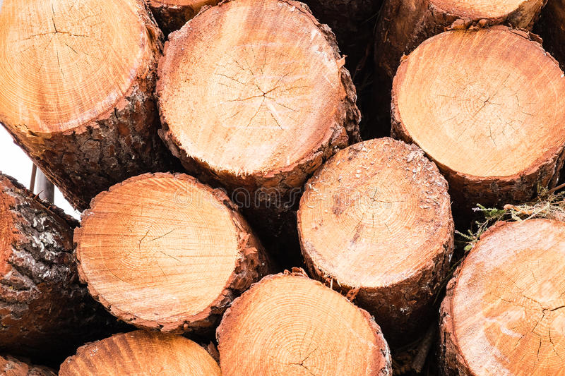 Pine logs. A pile of pine logs on a truck for transport royalty free stock photo