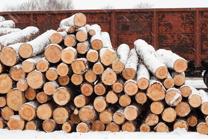 Pine logs on the railroad platform in winter royalty free stock photos