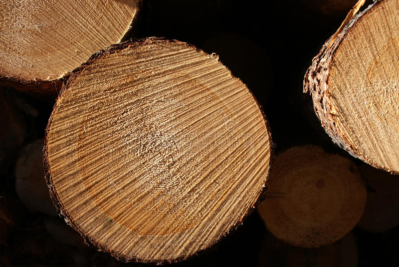 Pine Logs Stacked Macro royalty free stock photo