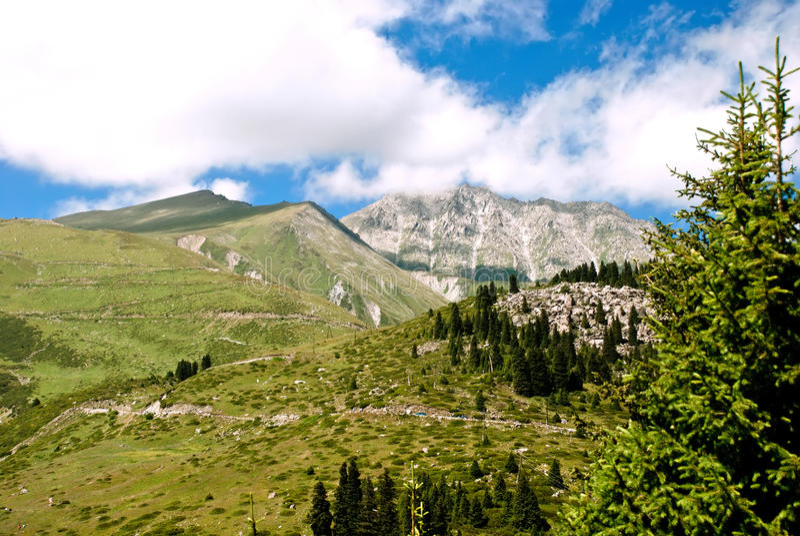 Pine mountain stock photography