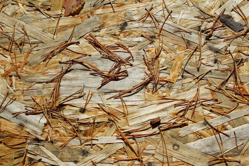 Download Pine needles stock image. Image of cold, plant, undergrowth - 21133355