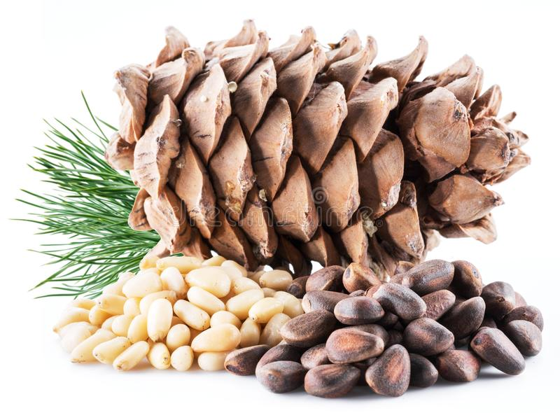 Pine nut cone and pine nuts on the white background. Organic foo. D royalty free stock photos