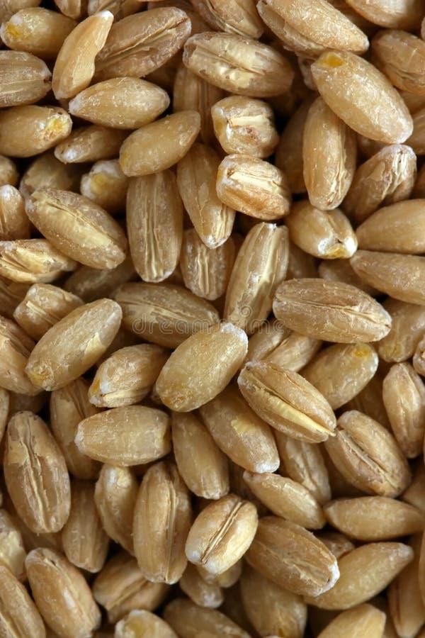 Pine Nuts. stock image