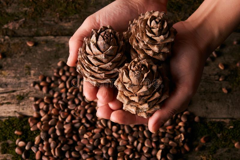 Pine nuts and handful of cedar fir pine cones stock photography