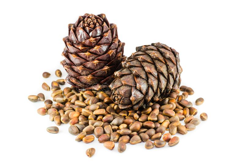 Pine nuts and ripe cedar cones on a white background stock photography