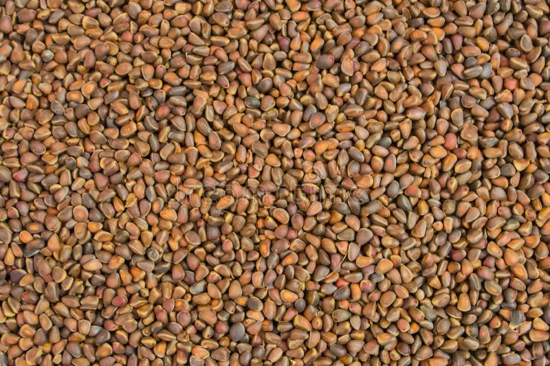 Pine nuts seeds of Siberian pine. Background stock images