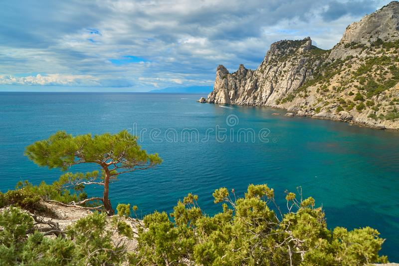 Pine over the sea royalty free stock photos