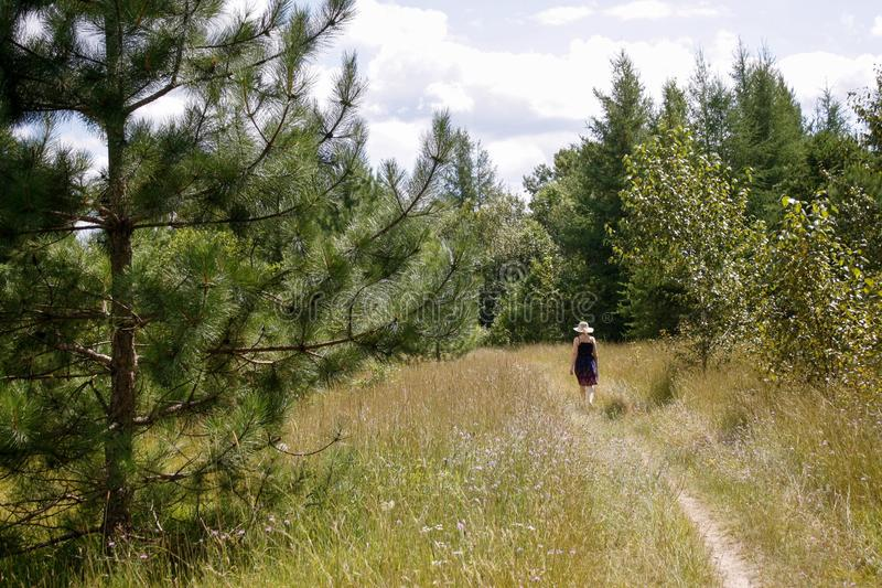 Pine passed on path landscape. Dirt path leads into forest area. One woman walks on path toward forest in background. She passes a pine tree in foreground royalty free stock photos