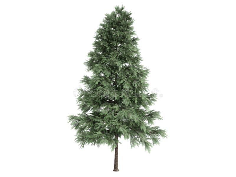 Pine_ (Pinus_sylvestris) ilustração stock