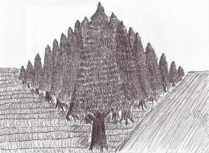 Pine plantation seen from a corner. Sometimes we need to take a break in a distant place, natural and full of oxygen, but we can not move for various reasons royalty free illustration