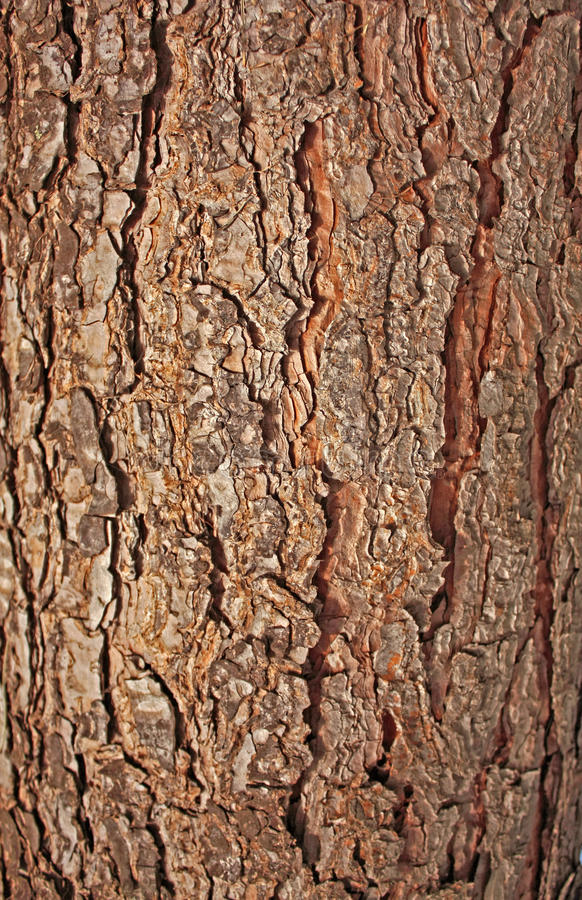 Download Pine Rind Stock Images - Image: 12143954