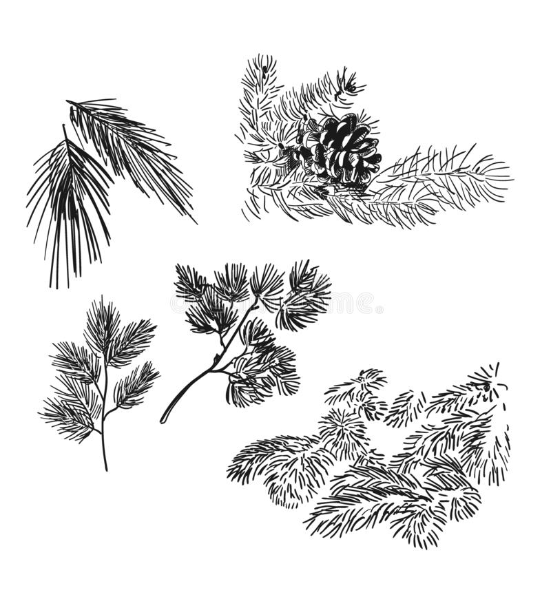 Pine and spruce branches design elements vector sketch set stock illustration