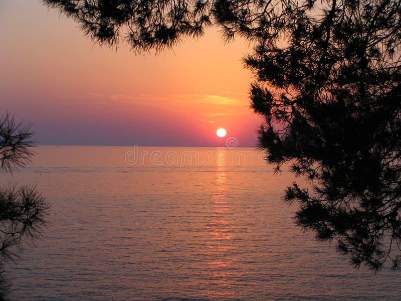 Pine sunset stock image
