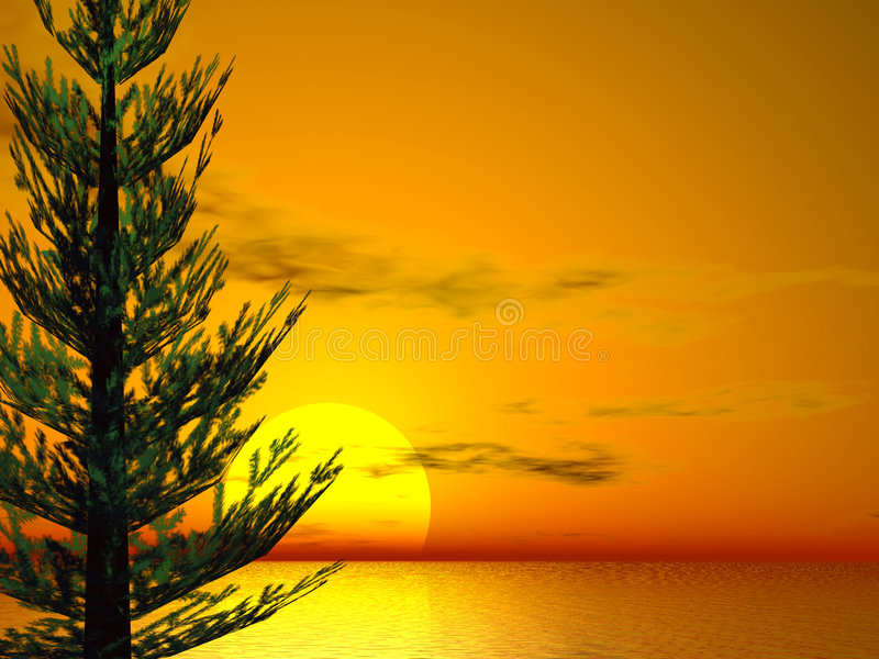 Pine Sunset. Brilliant sunset with pine tree
