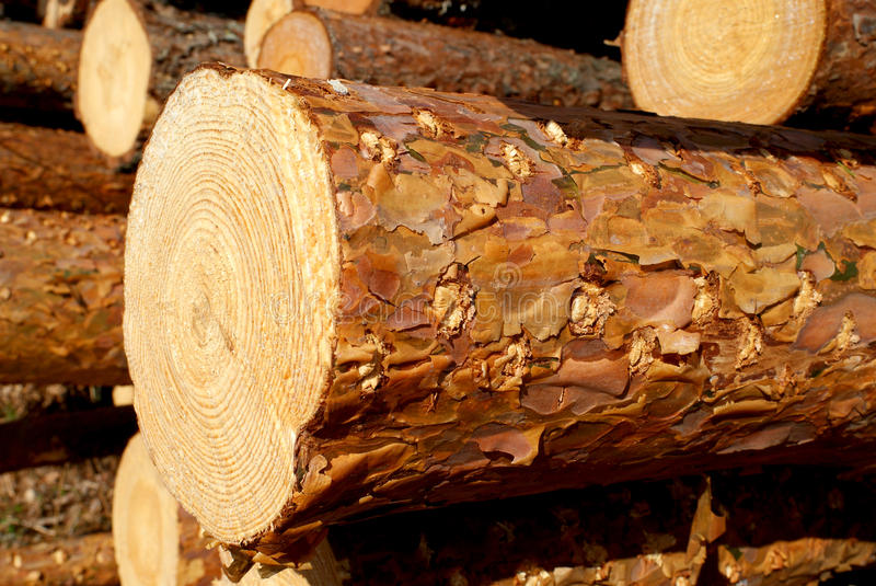 Pine Timber stock images