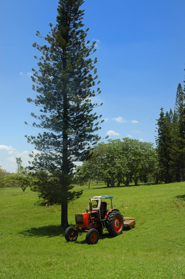 Pine and tractor. Landscape with red tractor pine tree and green grass field stock image