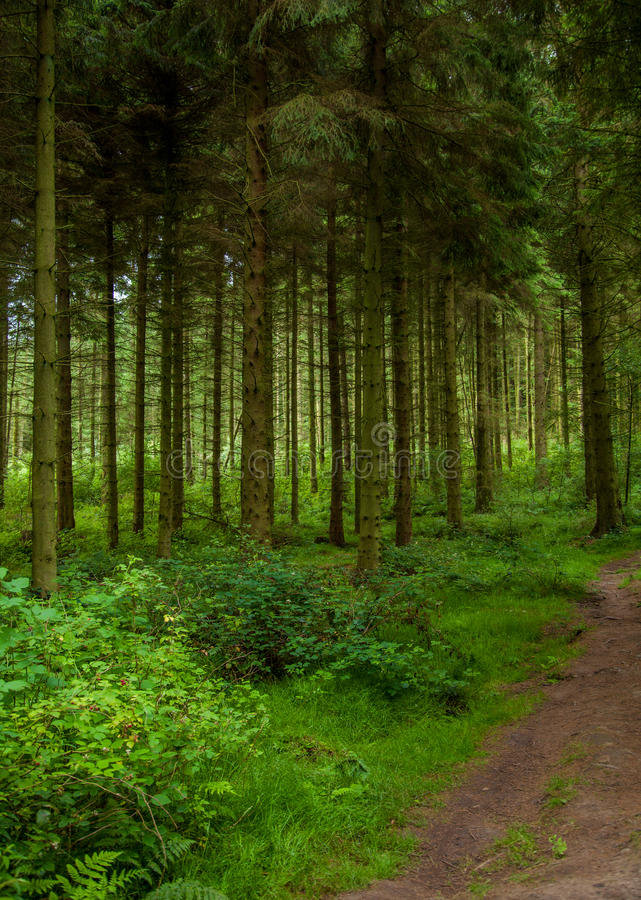Pine trail stock photography