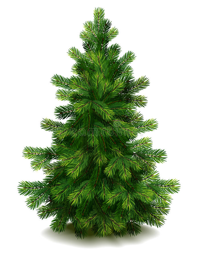 Pine tree royalty free illustration