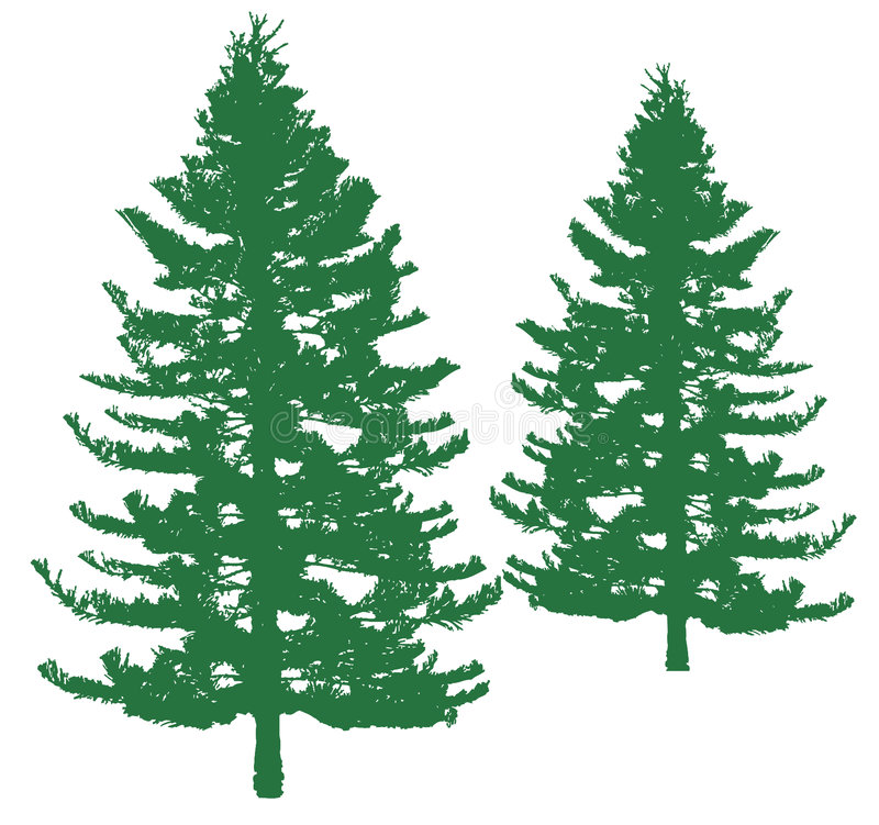 Pine tree. S as silhouettes with realistic looking, vector