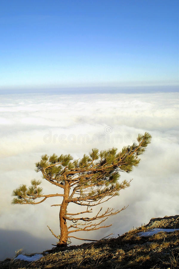 Download Pine tree above the clouds stock photo. Image of alps - 17553304