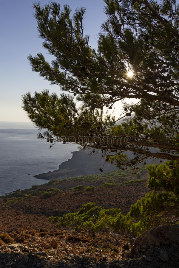 Pine Tree in Afternoon Sun on Southern Coast of Crete royalty free stock images