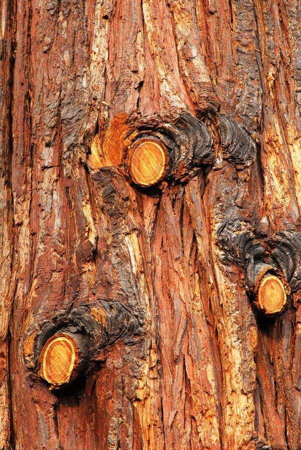 Pine tree bark stock image