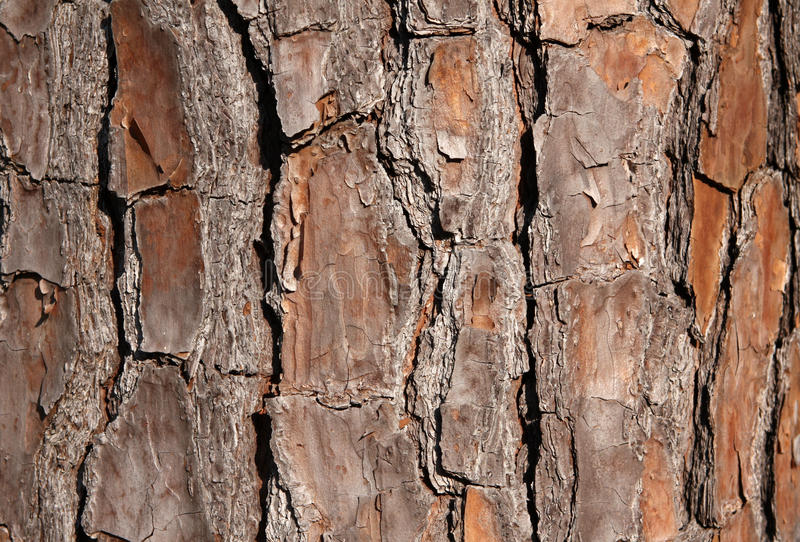 Download Pine Tree Bark For Background Stock Photo - Image: 16185302