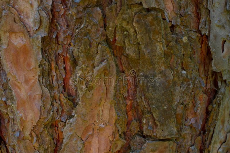 Pine tree bark background. Mulch. Wood texture, brown royalty free stock photos