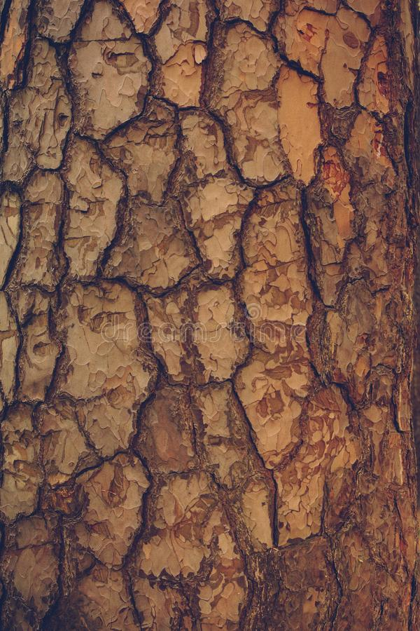 Pine tree bark texture with crisp scales.  stock images