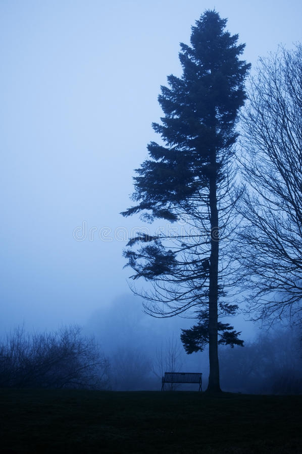 Download Pine Tree And Bench In Foggy Twilight. Stock Photo - Image: 28625838