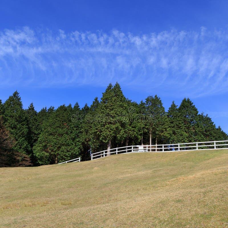 Pine tree and blue sky. At Mount Rokko Ranch royalty free stock photos
