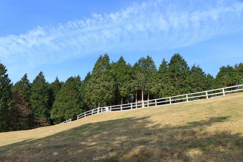 Pine tree and blue sky at Mount Rokko Ranch. Japan royalty free stock photo