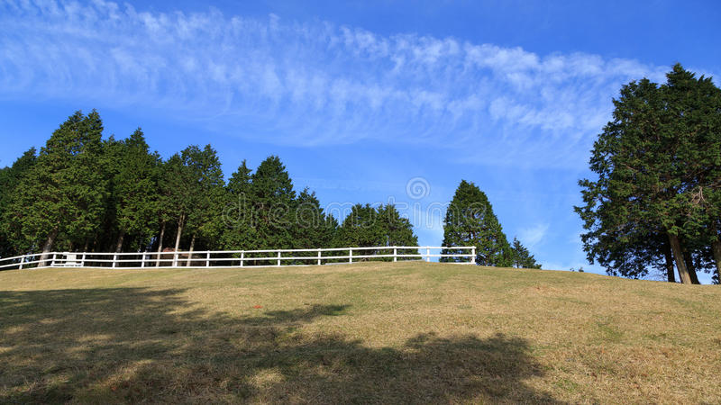 Pine tree and blue sky at Mount Rokko Ranch. Kobe, Japan stock images