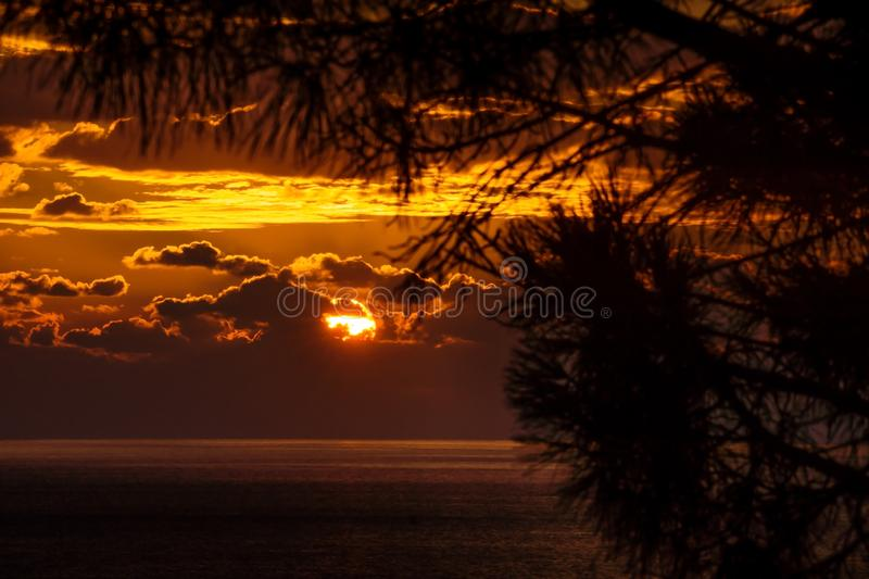 Pine tree branches in front of sunset behind the clouds with light on the ocean, focus on clouds, Dubrovnik, Croatia stock photography