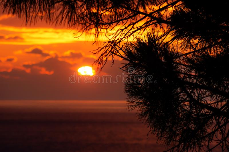 Pine tree branches in front of sunset behind the clouds with light on the ocean, Dubrovnik, Croatia royalty free stock photos