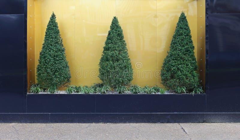 Pine tree bush. Three pine tree bush at gold background royalty free stock image