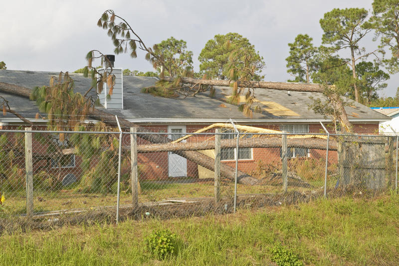 Download Pine Tree Collapses On House Roof Editorial Photo - Image: 26268436