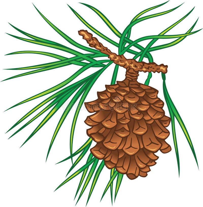 Pine tree cone vector illustration