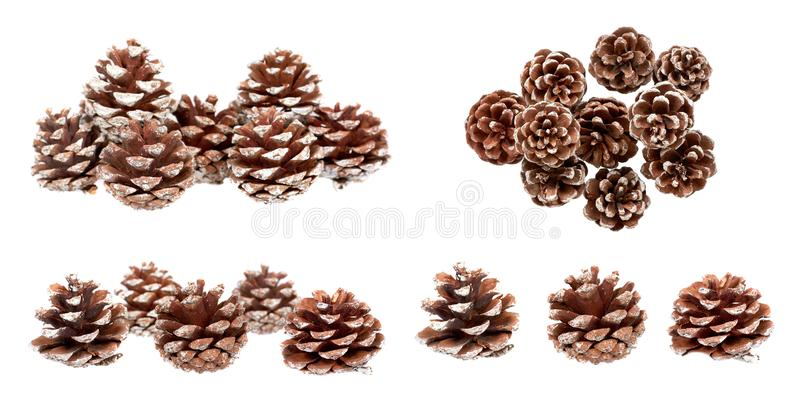 Pine tree cone, set and collection. Isolated. On white background, christmas, pinecone, element, winter, xmas, fir, holiday, decoration, traditional, nature royalty free stock photography