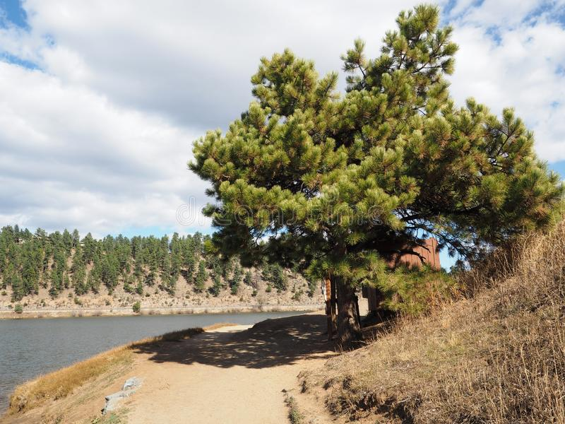 Pine tree by Evergreen Lake. A pine tree stands by a walking path around Evergreen Lake in Evergreen, Colorado royalty free stock photo