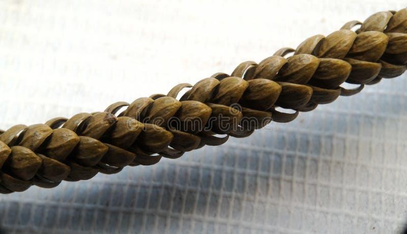 Pine tree flower stock photos