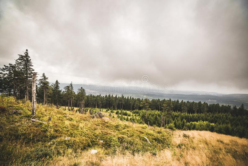 Pine tree forest on a hillside in misty cloudy weather. With a large grass area royalty free stock images